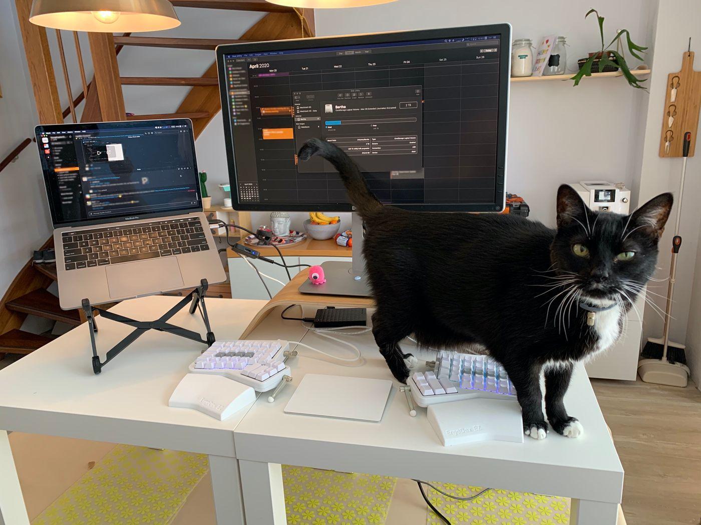 Eskimo and the WFH desk